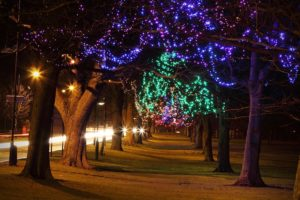 String lights on trees