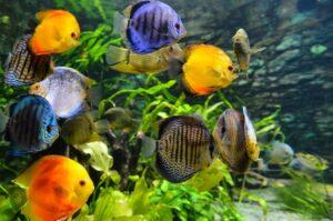 Best Aquarium Lights